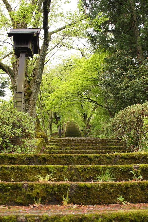 緑一色の石階段