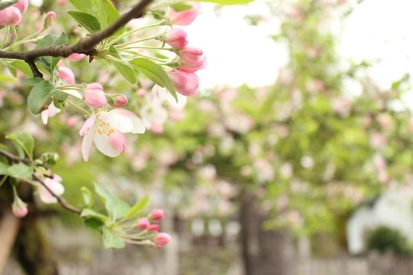 木につけた花アップ