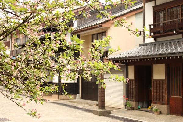 花越しに諏訪本通りがみえる