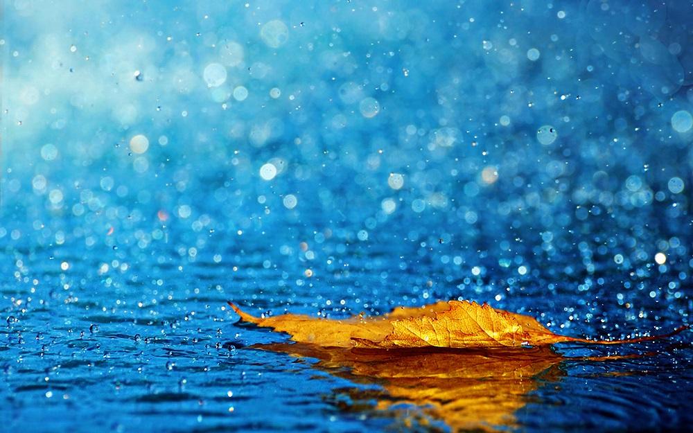 雨に打たれる落ち葉